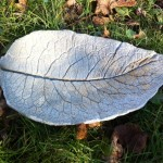 Comfrey Leaf