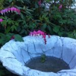 Bowl and Bleeding Heart